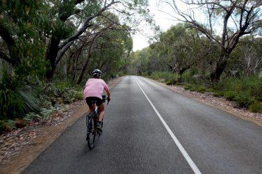Roadside vegetation in Flinders Chase.