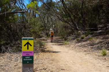 Part of the KI Wilderness Trail from Hanson Bay to Kelly Hill Caves.